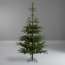 Buy John Lewis Argyle Christmas Tree, Green Fir, 6ft Online at johnlewis.com
