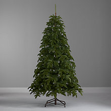 Buy John Lewis Roxburgh Pine Christmas Tree, 6ft Online at johnlewis.com
