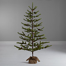 Buy John Lewis Shetland Pine Christmas Tree, 6ft Online at johnlewis.com