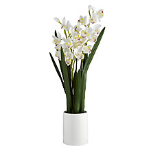 Buy John Lewis Potted Cymbidium, Small Online at johnlewis.com