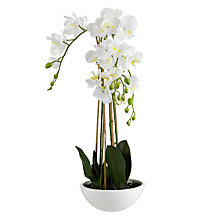 Buy John Lewis Large Potted Phalenopsis Online at johnlewis.com