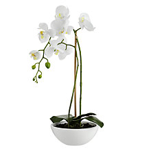 Buy John Lewis Small Potted Phalenopsis Online at johnlewis.com