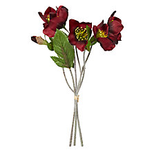Buy John Lewis Hellebore Bundle, Red Online at johnlewis.com