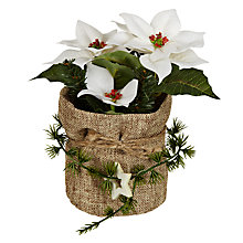 Buy John Lewis Hessian Potted Poinsettia, White Online at johnlewis.com