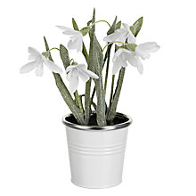 Buy John Lewis Croft Collection Snowdrop in Pot, Small Online at johnlewis.com