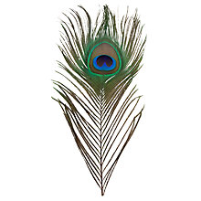Buy John Lewis Small Peacock Feather , Green Online at johnlewis.com