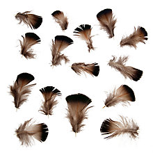 Buy John Lewis Short Pheasant Feathers, Pack of 20, Brown Online at johnlewis.com