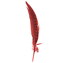 Buy John Lewis Pheasant Feather, Red Online at johnlewis.com