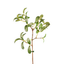 Buy Floral Silk Mistletoe Spray Online at johnlewis.com