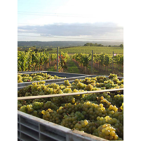 Buy Red Letter Days English Vineyard Tour Online at johnlewis.com