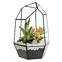 Buy Urban Botanist Gem Succulents Aztec Terrarium Online at johnlewis.com