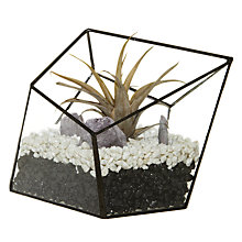 Buy Urban Botanist Multiflora Aztec Diamond Terrarium Online at johnlewis.com