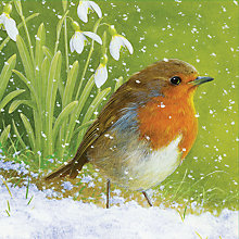 Buy Special Editions Robin and Snowdrop Christmas Charity Cards, Box of 8 Online at johnlewis.com