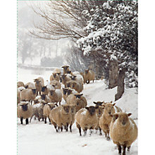Buy Special Editions Sheep in Snow Charity Christmas Card, Pack of 5 Online at johnlewis.com