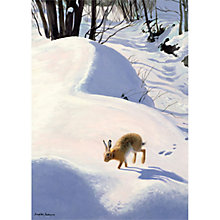 Buy Museums & Galleries Hare in the Snow Charity Christmas Cards, Pack of 8 Online at johnlewis.com