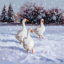 Buy Museums & Galleries Geese Charity Christmas Cards, Pack of 5 Online at johnlewis.com
