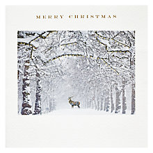 Buy Susan O'Hanlon Trees In Snow With Deer Christmas Card Online at johnlewis.com