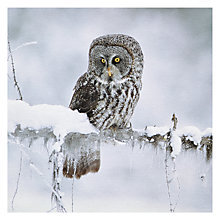 Buy Paperhouse National Geographic Great Grey Owl Christmas Card Online at johnlewis.com