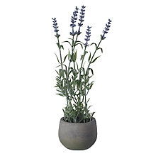 Buy Lavender in Small Grey Pot Online at johnlewis.com