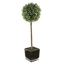 Buy Peony Tall Boxwood Cube Online at johnlewis.com