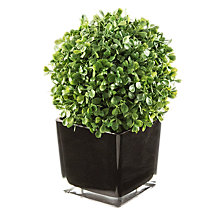 Buy Peony Short Boxwood Cube Online at johnlewis.com