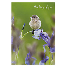 Buy Woodmansterne Free Spirit Greeting Card Online at johnlewis.com