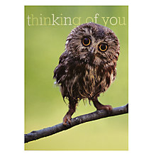 Buy Woodmansterne Twit-Twoo Greeting Card Online at johnlewis.com