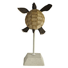 Buy John Lewis Small Turtle on a Stick Ornament Online at johnlewis.com