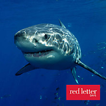 Buy Red Letter Days Scuba Diving With Sharks Online at johnlewis.com