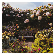 Buy Paperhouse RHS Chelsea Shrub Rose Garden Greetings Card Online at johnlewis.com