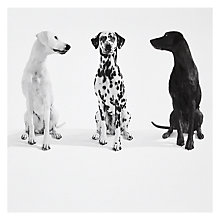 Buy Woodmansterne Top Dog Greetings Card Online at johnlewis.com