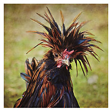 Buy Woodmansterne Bad Hair Day! Greetings Card Online at johnlewis.com