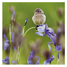 Buy Woodmansterne Young Stonechat Greetings Card Online at johnlewis.com
