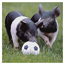 Buy Woodmansterne Ball Hog Greetings Card Online at johnlewis.com