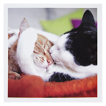 Buy Catit Bliss! Greeting Card Online at johnlewis.com