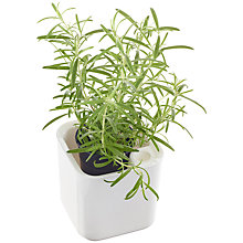 Buy Orthex Self-Watering Eden Herb Pot, 12cm Online at johnlewis.com