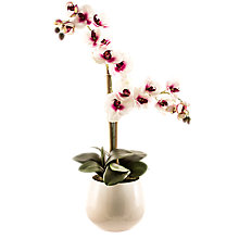 Buy Peony Pink and White Phalaenopsis Orchid in Pot Online at johnlewis.com