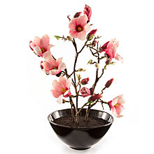 Buy Peony Pink Magnolia in Large Black Bowl Online at johnlewis.com