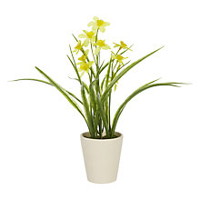 Buy John Lewis Daffodil in Pot Online at johnlewis.com