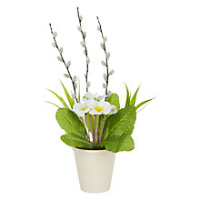 Buy John Lewis White Primrose in Pot Online at johnlewis.com