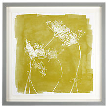 Buy Croft Collection - Parsley Fennel Framed Print, 42.7 x 42.7cm Online at johnlewis.com