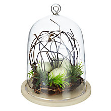 Buy John Lewis Egg Basket in Glass Dome Online at johnlewis.com