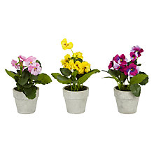Buy John Lewis Potted Pansies, Assorted Online at johnlewis.com