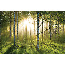 Buy 1Wall Forest Wall Mural Online at johnlewis.com