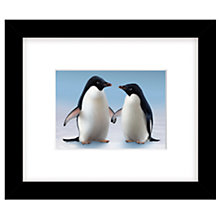 Buy John Lewis Monty and Mabel the Penguins Framed Print, 23 x 27cm Online at johnlewis.com