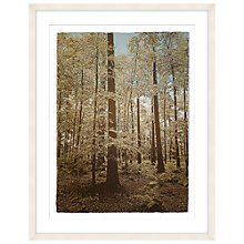 Buy Anna Hanley - Autumn Beech Limited Edition Framed Screenprint, 96 x 76cm Online at johnlewis.com