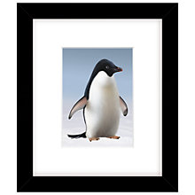 Buy John Lewis Monty the Penguin Framed Print, 27 x 23cm Online at johnlewis.com