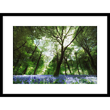 Buy Paul Sanders - Bluebells Framed Print, 67 x 87cm Online at johnlewis.com