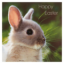 Buy Framed Baby Rabbit Easter Greeting Cards, Set of 5 Online at johnlewis.com