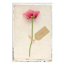 Buy Deborah Schenck - Pink Poppy Unframed Print with Mount, 30 x 40cm Online at johnlewis.com